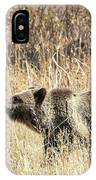 Grizzly Bear IPhone Case by Michael Chatt