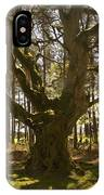 ancient tree in forest near Greenlawin Scottish Borders IPhone Case