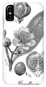 Camellia Sinensis, Botanical Vintage Engraving IPhone Case