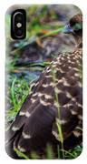 Falcon Chimango Caracara, Tierra Del Fuego National Park, Ushuaia, Argentina IPhone Case