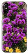 Hedgehog Cactus And Yellow Daisies IPhone Case