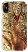 Male Gerenuk IPhone Case