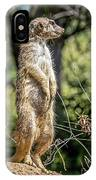 Meerkat Alert IPhone Case by Kate Brown