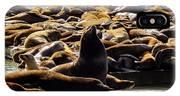 San Francisco's Pier 39 Walruses 1 IPhone Case