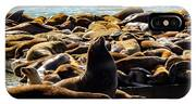 San Francisco's Pier 39 Walruses 2 IPhone Case