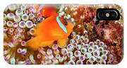 The Fiji Clownfish  Amphiprion Barberi IPhone X Case