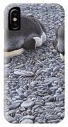 Two King Penguins By Alan M Hunt IPhone Case by Alan M Hunt