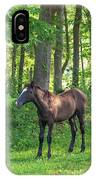 Young Brown Colt IPhone Case