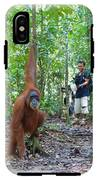 Sumatran Orangutan IPhone X Tough Case