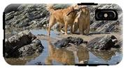Two Golden Retrievers Playing IPhone X Tough Case