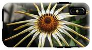 Osteospermum Named African Moon IPhone X Tough Case