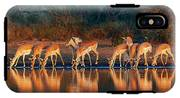 Impala Herd With Reflections In Water IPhone X Tough Case
