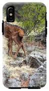 Newborn Elk Calf IPhone X Tough Case