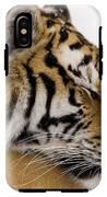 Tiger Sleeping IPhone X Tough Case