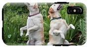 Two Yellow Labrador Retrievers Sitting IPhone X Tough Case