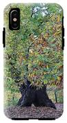 Chestnut Tree In Autumn IPhone X Tough Case