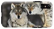 Gray Wolf Canis Lupus Pair In The Snow IPhone X Tough Case