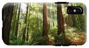 Light The Way - Redwood Forest Of Muir Woods National Monument With Sun Beam. IPhone X Tough Case