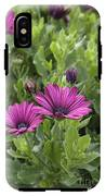 Osteospermum Flowers IPhone X Tough Case
