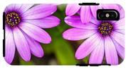 Purple Petals IPhone X Tough Case