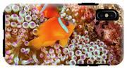 The Fiji Clownfish  Amphiprion Barberi IPhone X Tough Case