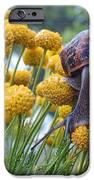 Brown Garden Snail IPhone 6s Case by Walter Klockers