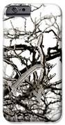 Ice On Branches IPhone 6s Case by Blink Images