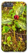 Praire Trillium IPhone 6s Case by Thomas Pettengill