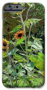 Sunflower Garden IPhone 6s Case by Annette Allman