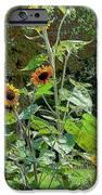 Sunflower Garden IPhone 6s Case