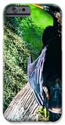 Anhinga On A Cyprus IPhone 6s Case by Frank Feliciano