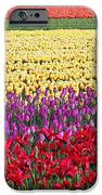 Colors Of Holland IPhone 6s Case