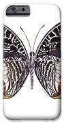 88 Castor Butterfly IPhone 6s Case by Amy Kirkpatrick