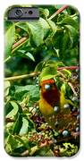 A Day With Mr. Tanager 2 IPhone 6s Case by Jacquelyn Roberts