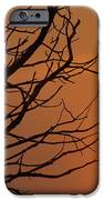 A Hummingbird Setting In A Tree At Sunset IPhone 6s Case
