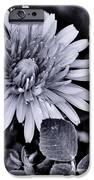 A Simple Daisy IPhone 6s Case by Edward Hamilton