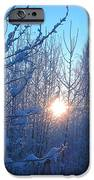 Alaska Sunrise Shining Through Birches And Willows IPhone 6s Case
