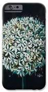 Allium IPhone 6s Case by Lynette Yencho