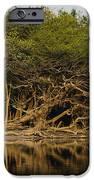 Amazon Trees IPhone 6s Case