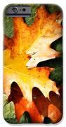 Autumn Blaze IPhone Case by JAMART Photography