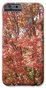 Autumn Blaze IPhone 6s Case by Kevin Croitz