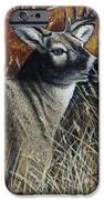 Autumn Buck IPhone 6s Case by Kimberly Blaylock
