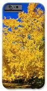 Autumn Colors Gingko Tree  IPhone 6s Case