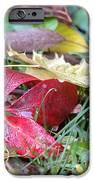 Autumn Colours   IPhone 6s Case