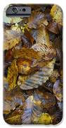 Autumn Leaves IPhone 6s Case by David  Hawkins