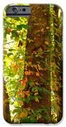 Autumn Vines IPhone 6s Case by Candice Trimble