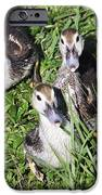 Baby Ducks IPhone 6s Case by Andres LaBrada
