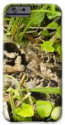 Baby Woodcock IPhone 6s Case by Thomas Pettengill