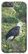 Bald Eagle IPhone 6s Case by Jennifer Kimberly
