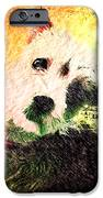 Baxter IPhone 6s Case by Kevyn Bashore